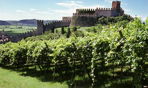 Matrimonio In Vigna Toscana : Vini toscana